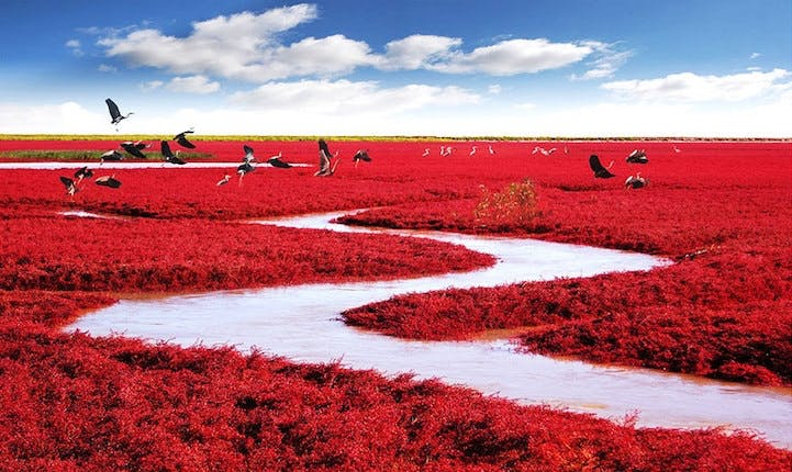 Red Seabeach, Kina