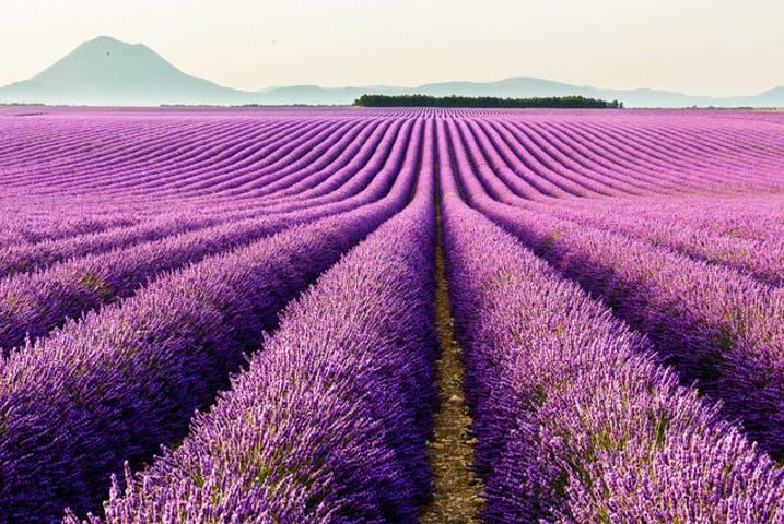 Valensole, Alpes-de-Haute-Provence, Frankrig