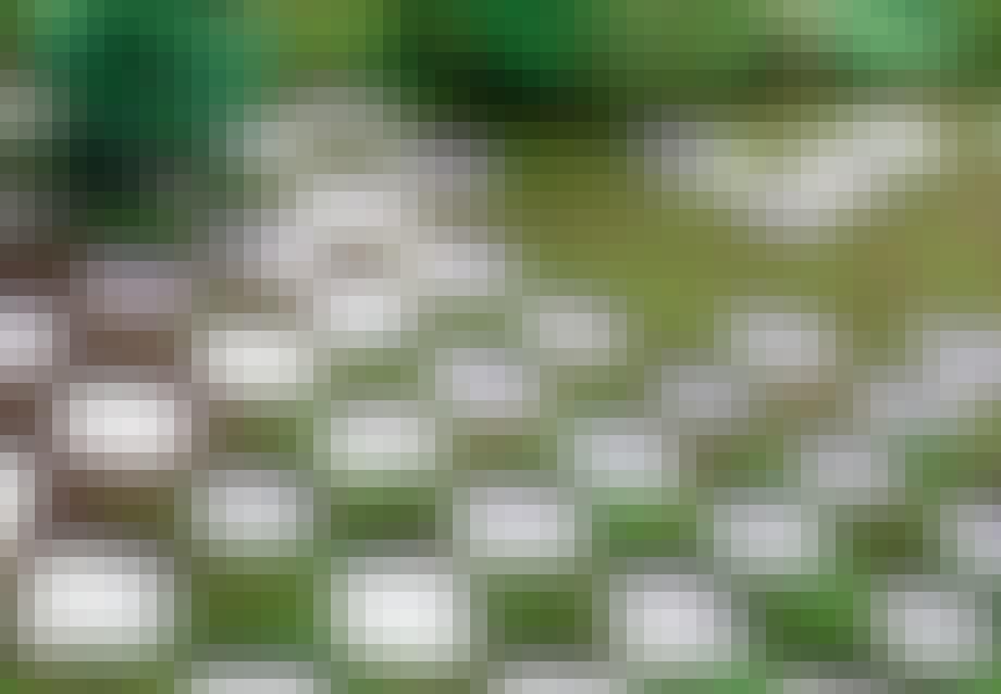 Have med minimalistiske skaksten