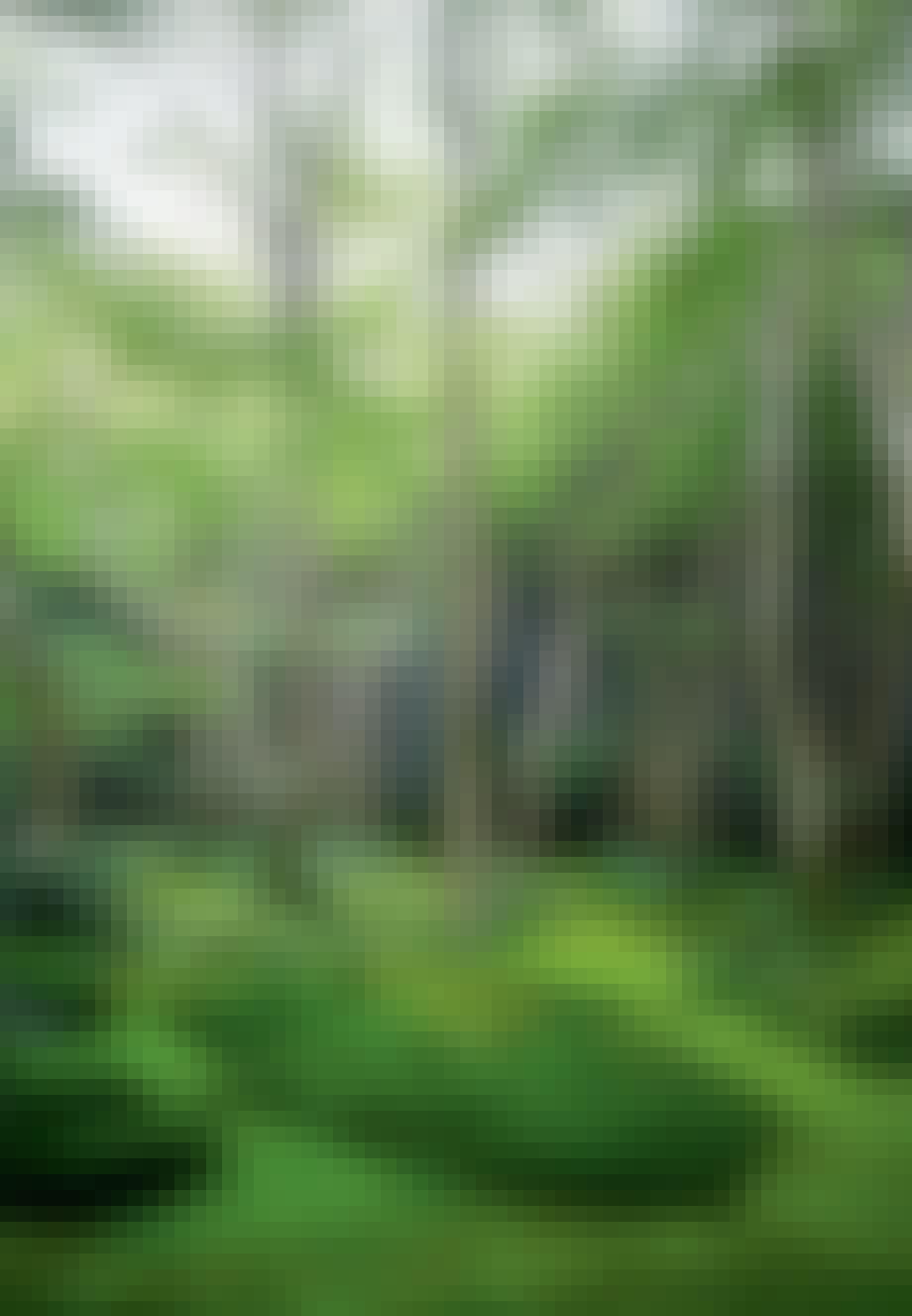 Havearbejde som meditationskunst