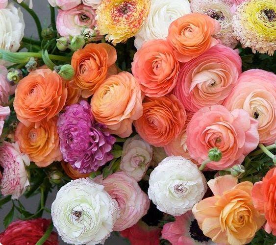 En af verdens mest romantiske blomster
