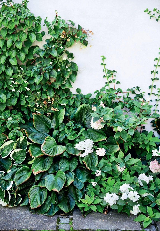 Smukke pæoner, hortensiaer og hostaer