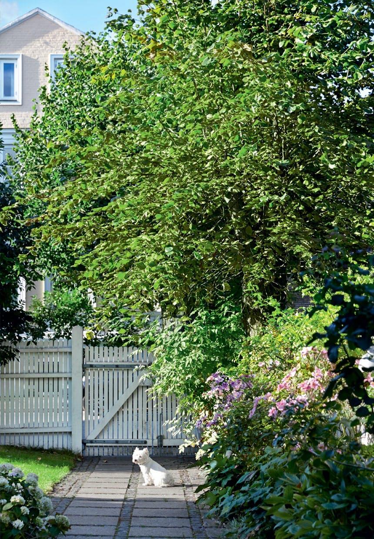 Rolig villavej på Frederiksberg