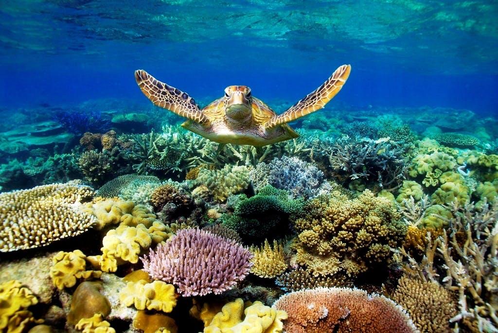 Oplev den fantastiske verden under havoverfladen ved Great Barrier Reef i Australien