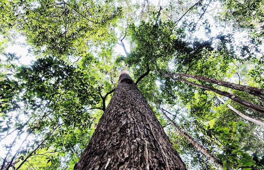 Prøv træklatring i Amazonas