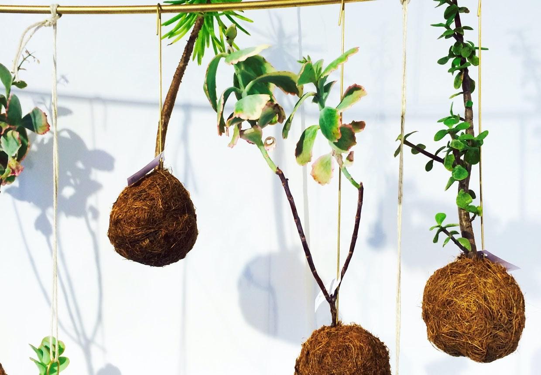indendørs hængeplanter