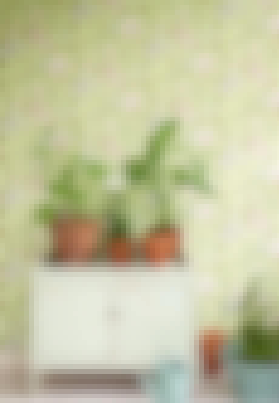 Planter på tapetet