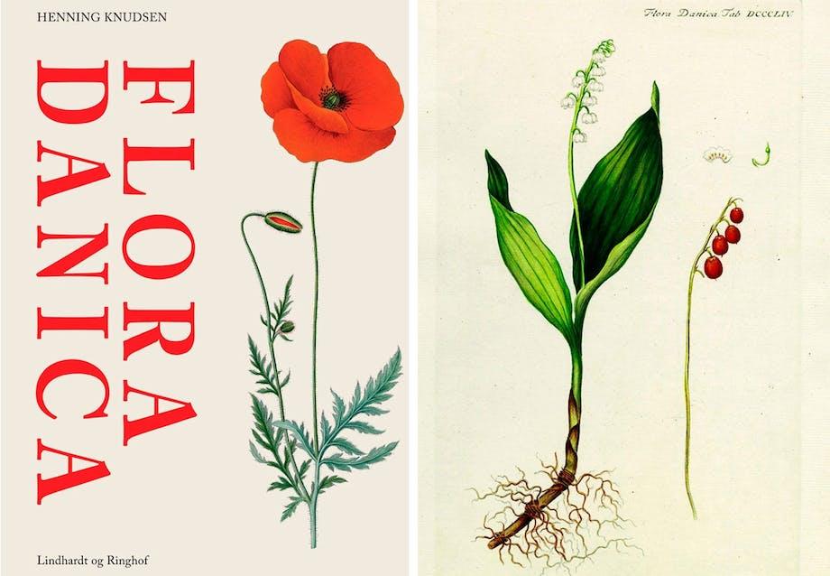 Planten, der passer sig selv