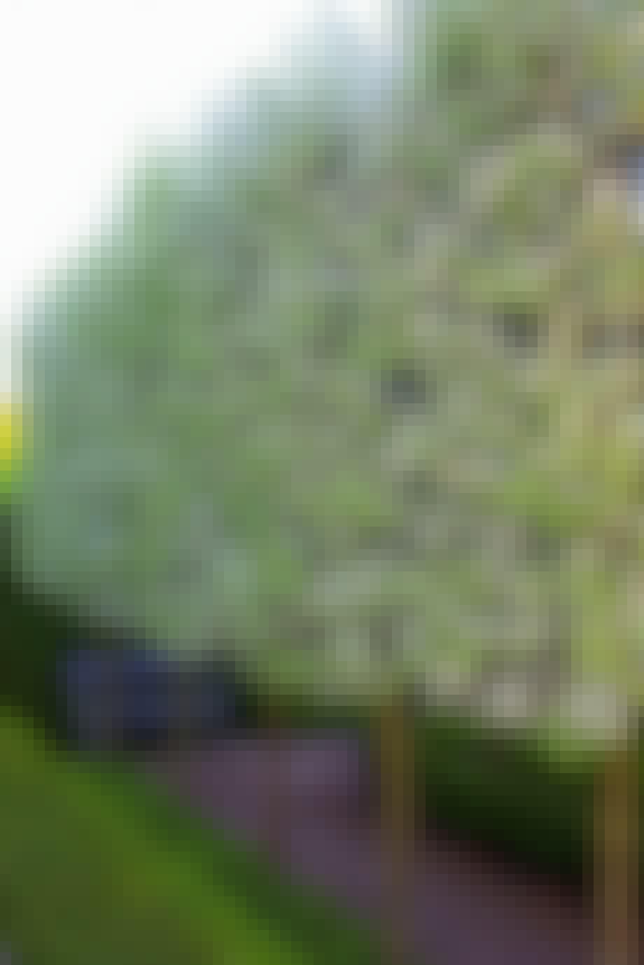 Hvilke træer egner sig?