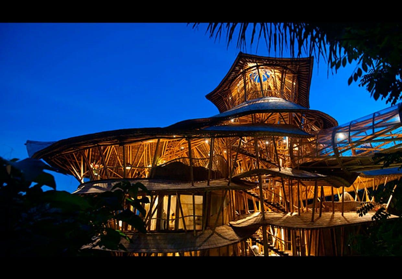 Bambus by night