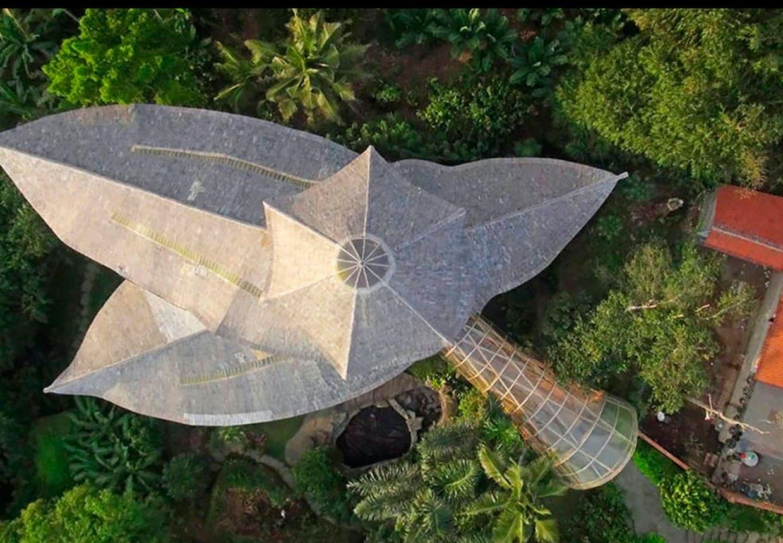Bambus i fugleperspektiv