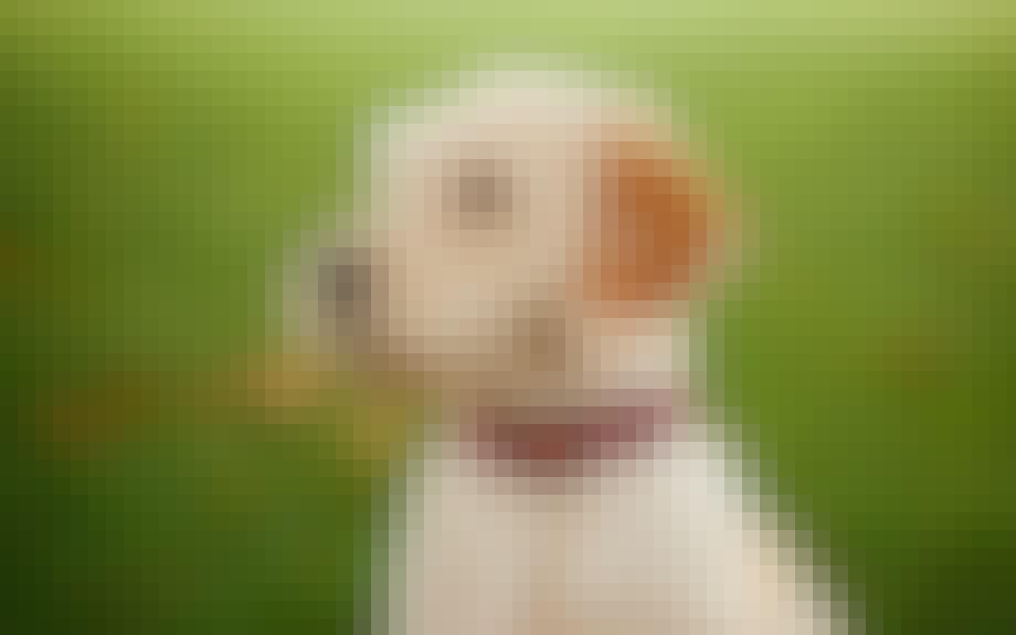 Aktivitetsmåler til din hund