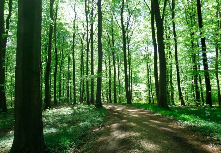 Enemærket Skov