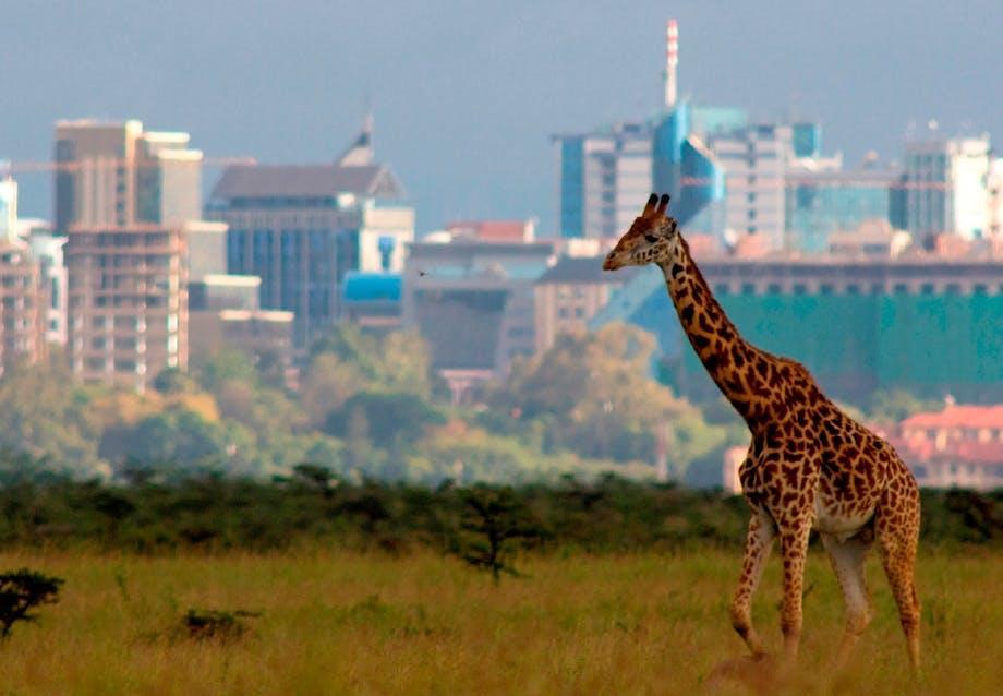 Nairobi National Park i Kenya