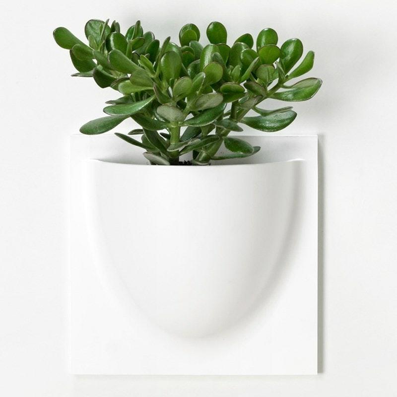 urtepotter til ophæng på væg