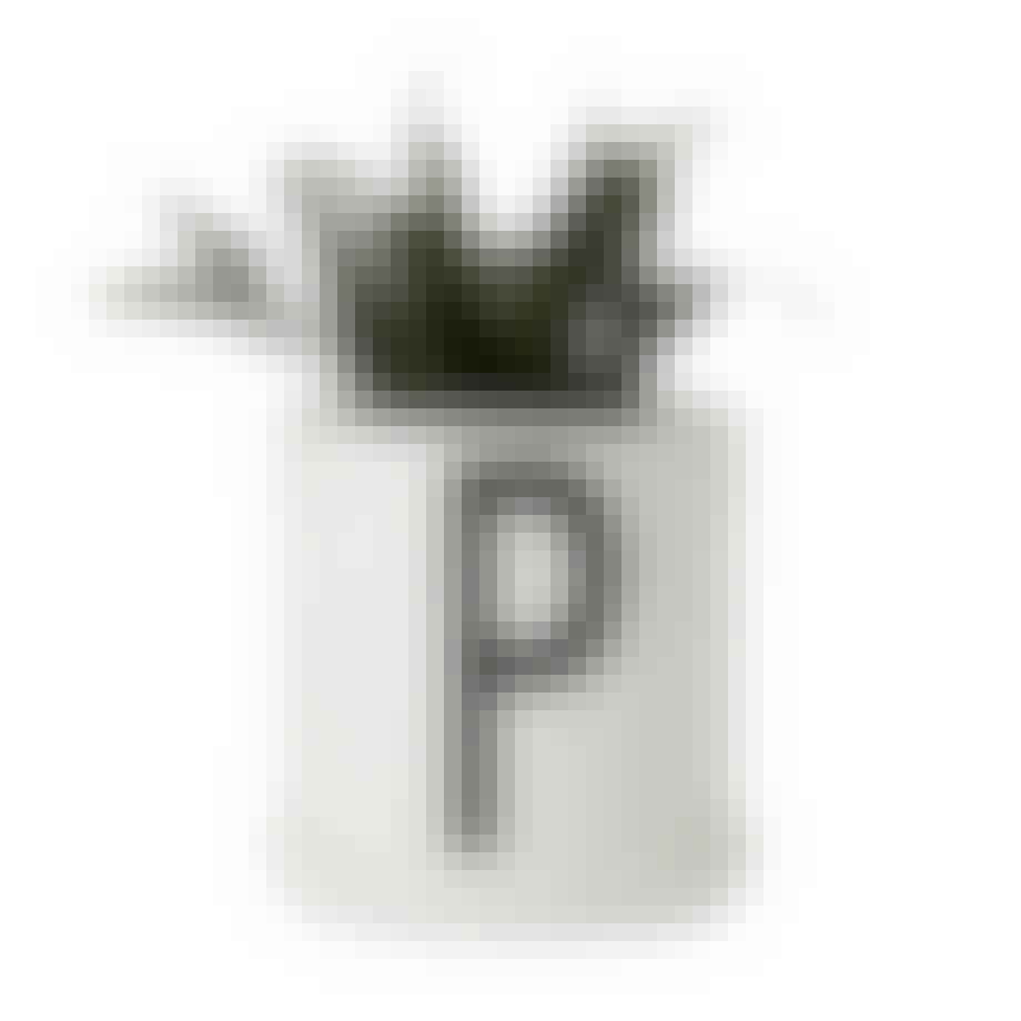 P for plante