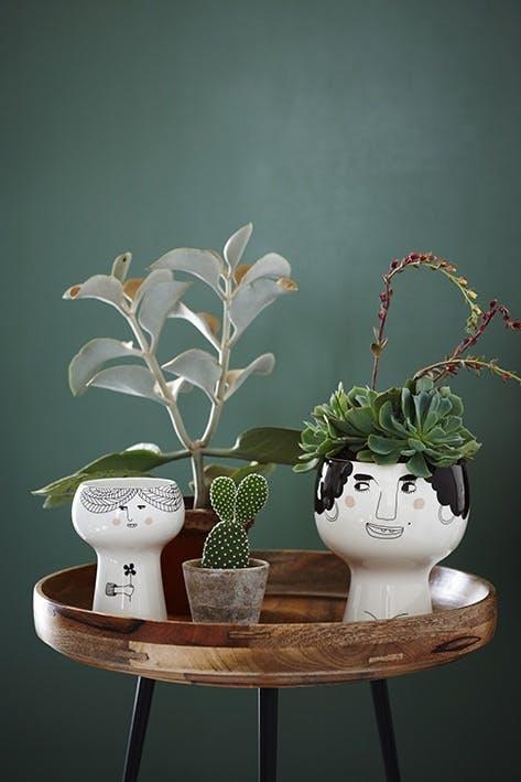 Urtepotteskjulere med kaktusser og sukkulenter