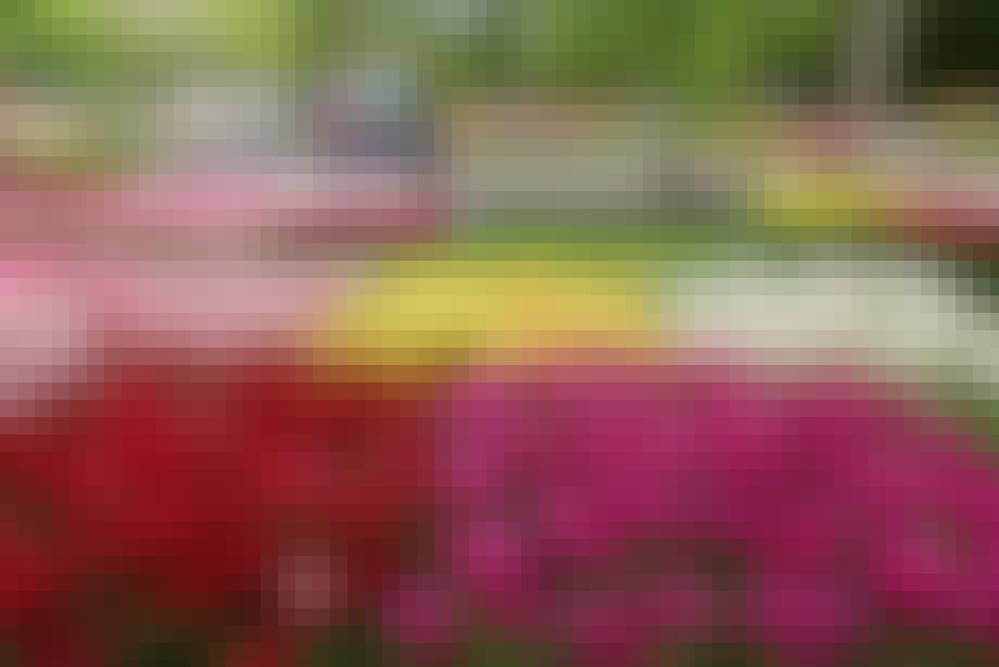 Velkommen til haven med de syv millioner blomster