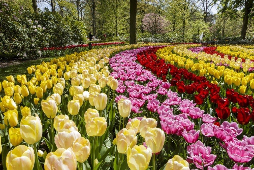 Keukenhof haven i Holland