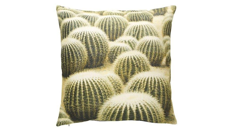 Cactus Cotton