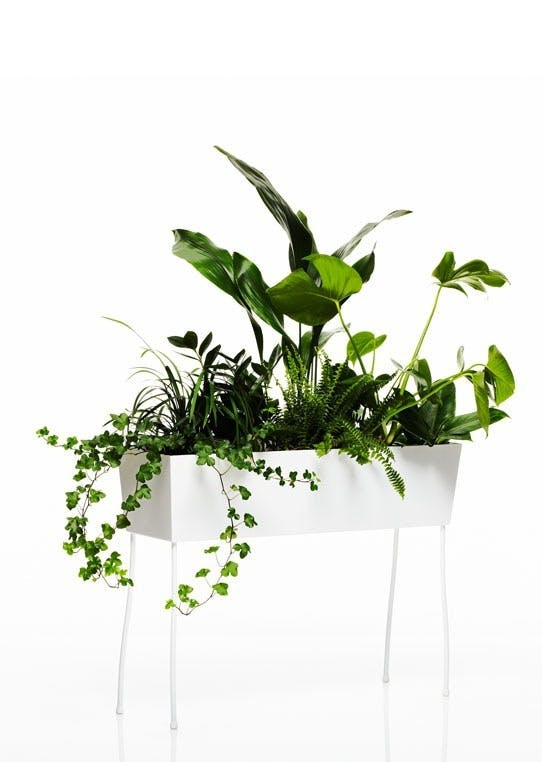 Blomsterkrukke, Piedestal