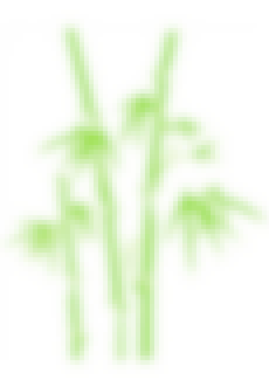 Wallsticker, Big Bamboo