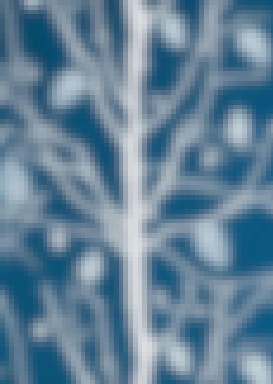 Tapet, Family Tree