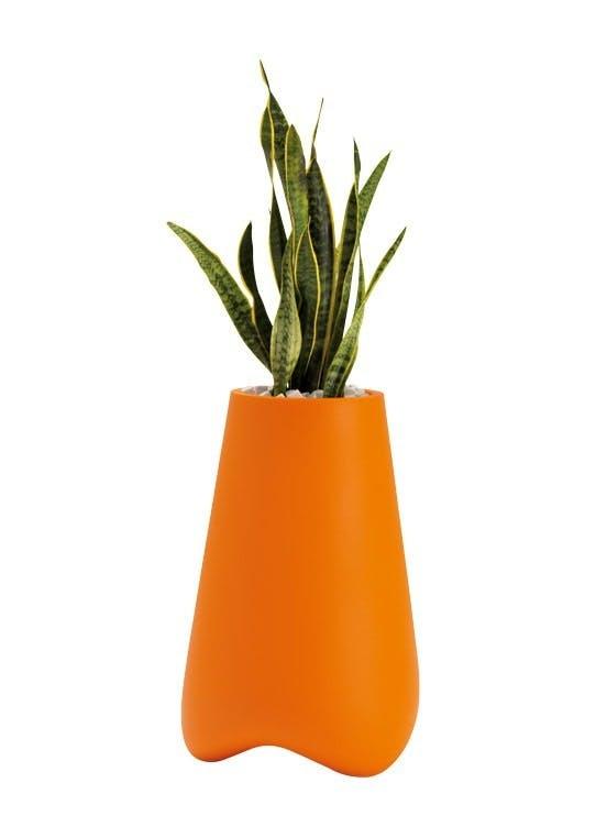 Plantekrukke, Vlek