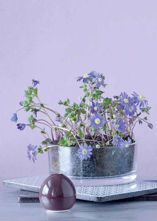 Dekoration med blomst i skål
