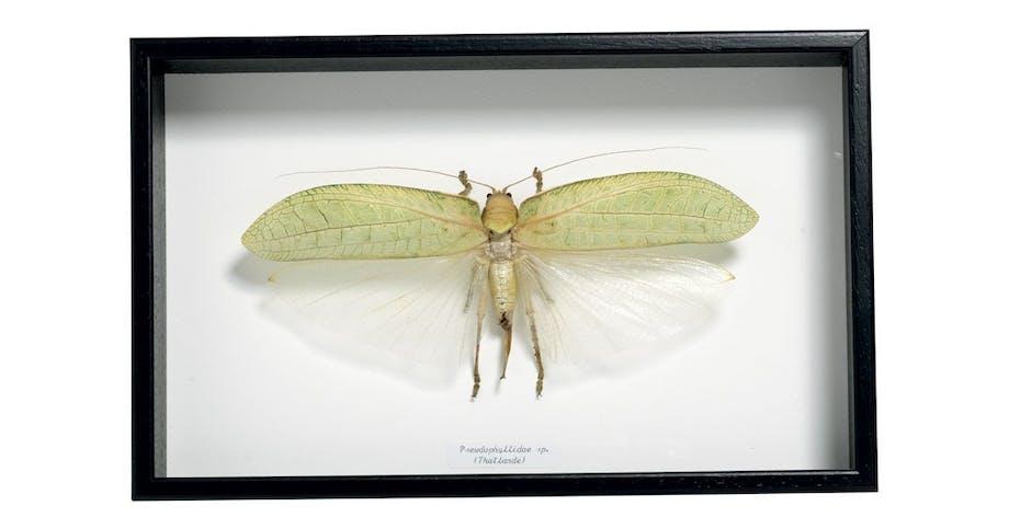 Ramme med insekt