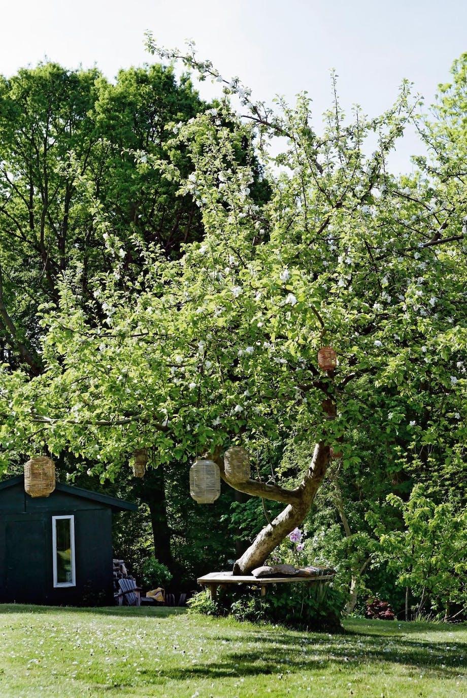 Det store æbletræ