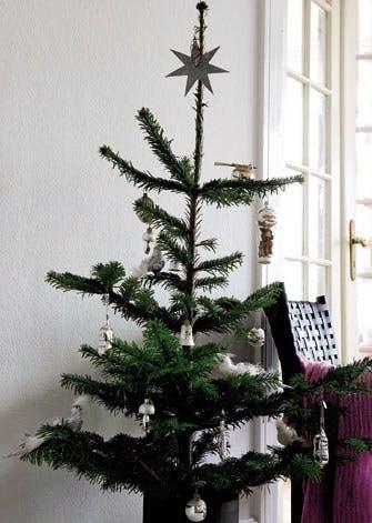 Juletræ i miniversion