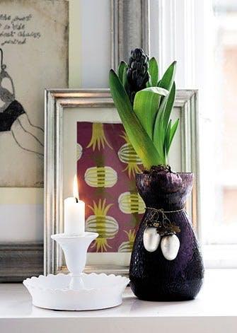 Hyacinter i julens farver