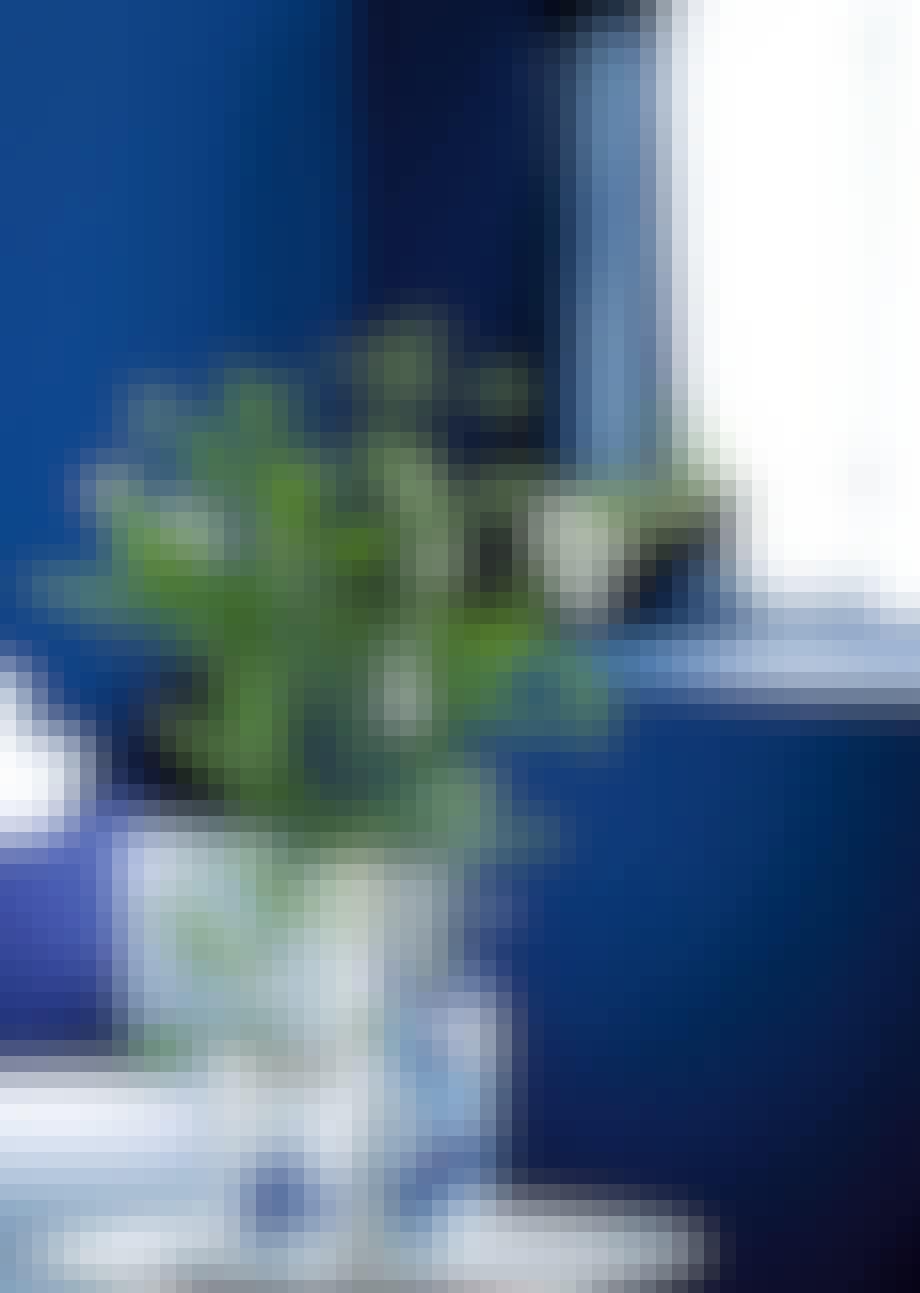 Vælg hvide vaser med blå dekoration