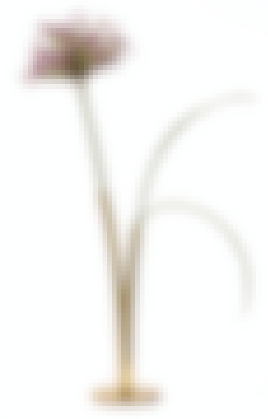 vase vaser blomst opsats
