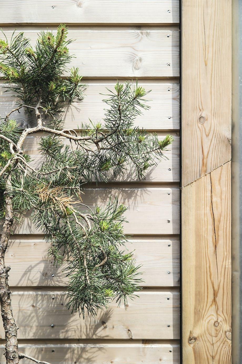 Træ gran naverhuset