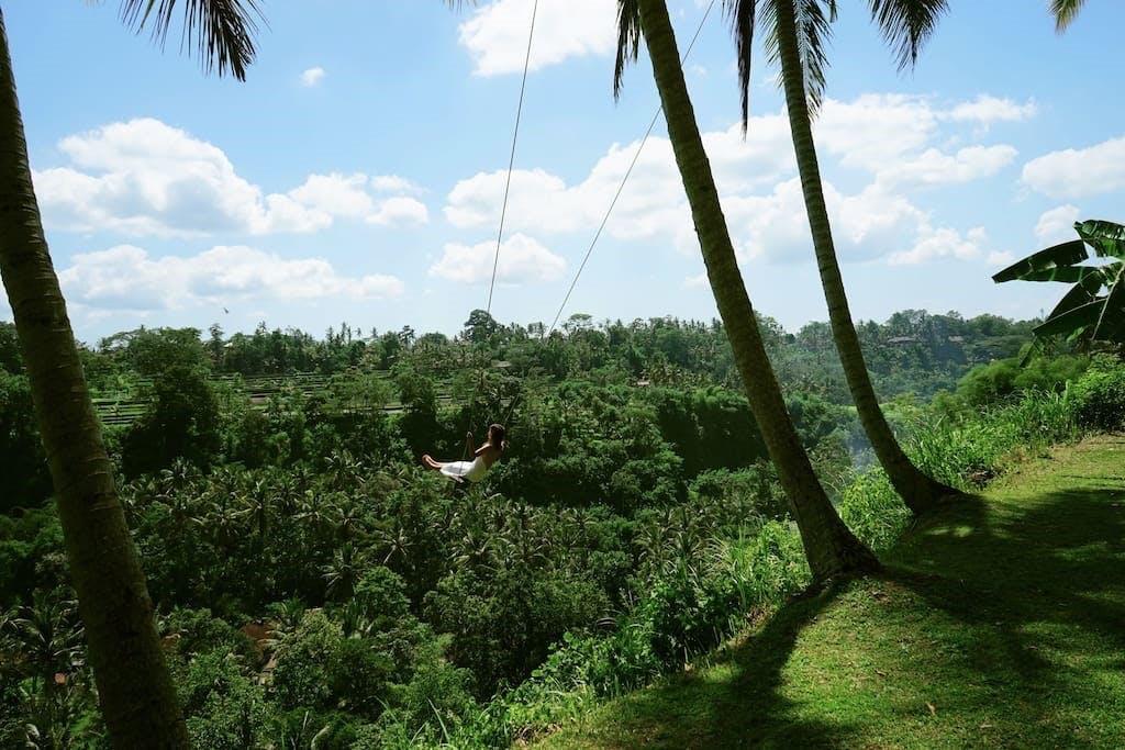 Bali gynge jungle