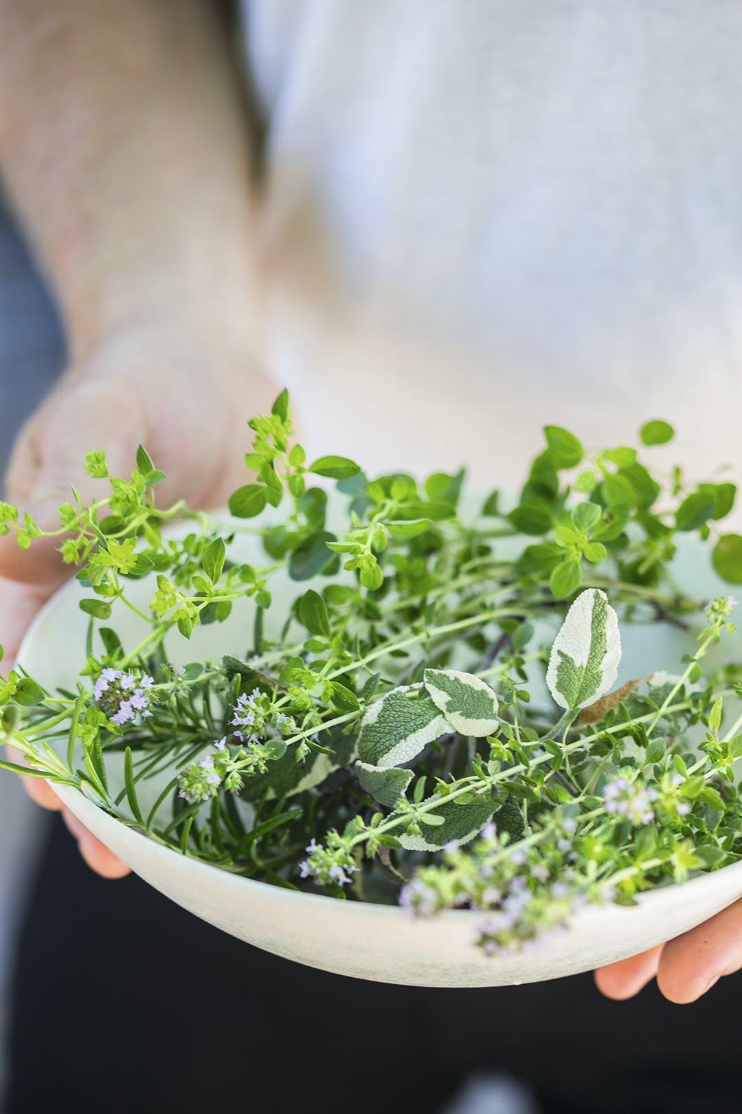 Krydderurter salat skål