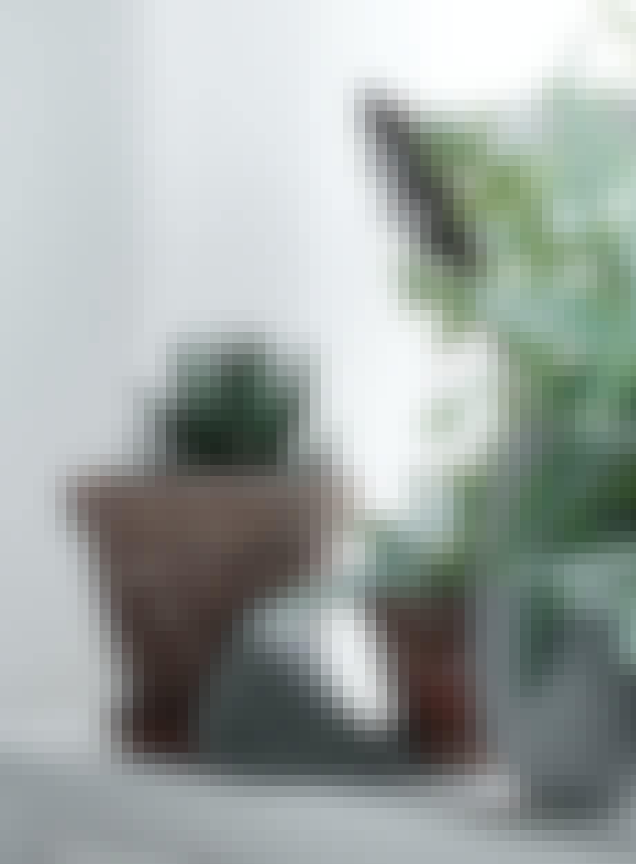 grønne planter vindueskam sten