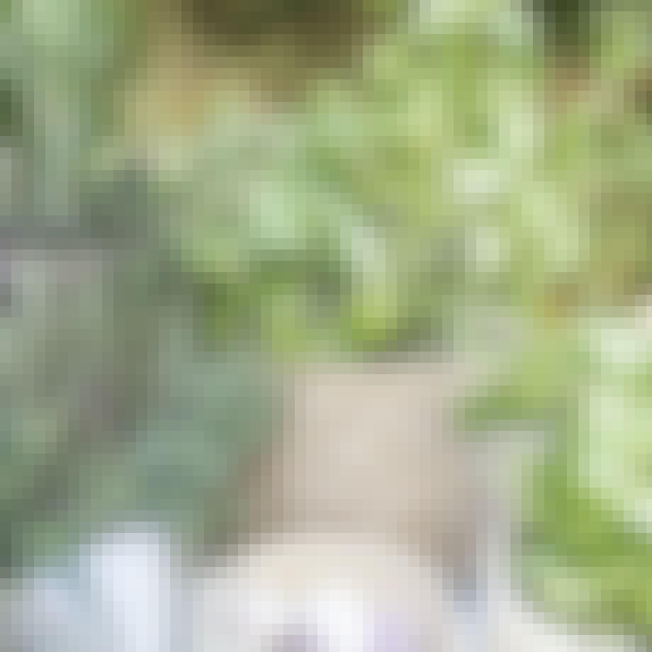 Flet kurv med urter