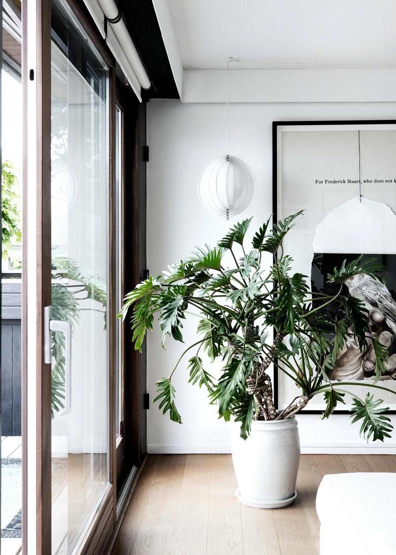 Grønne planter interiør