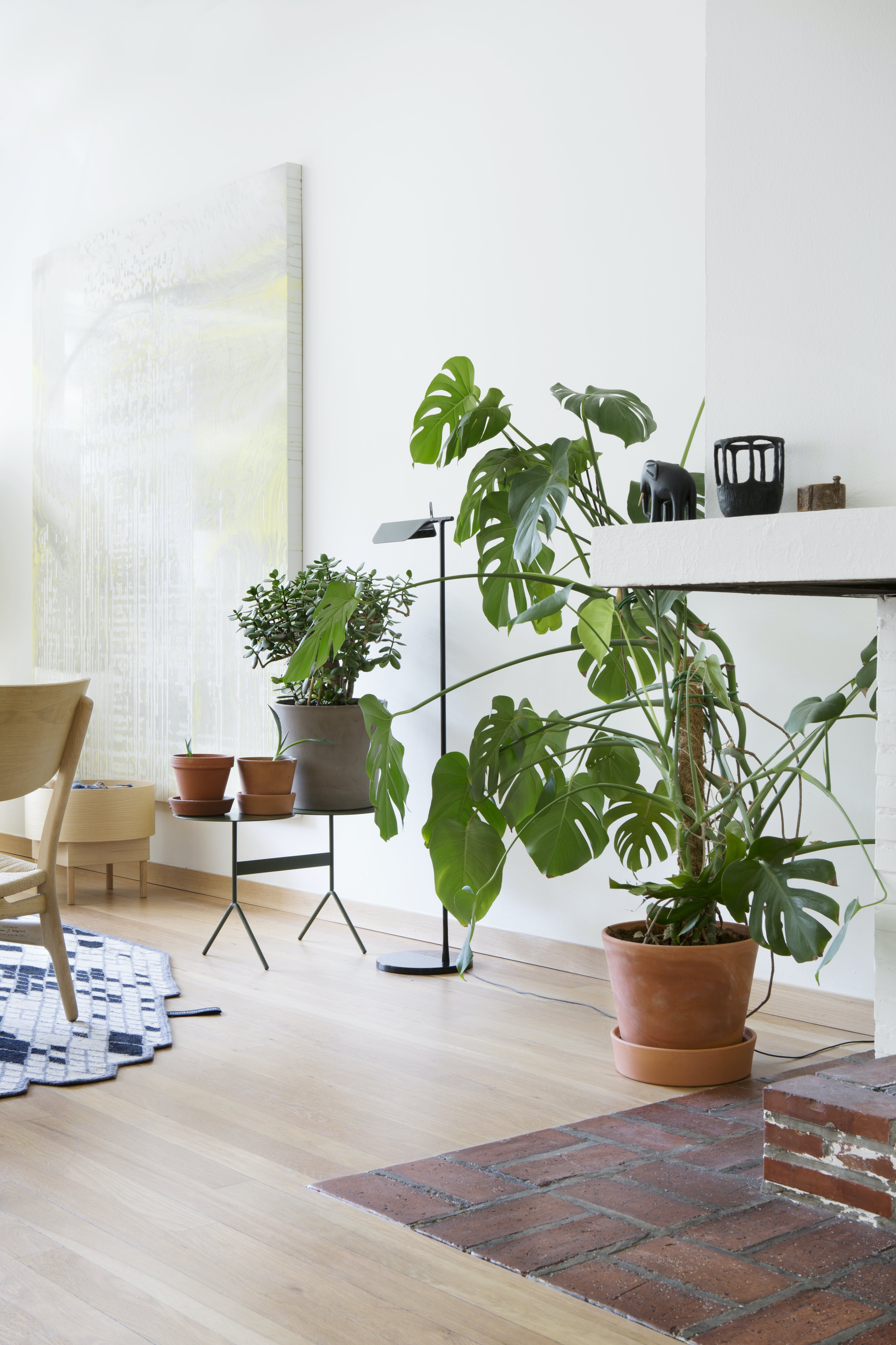 grønne planter | monstera