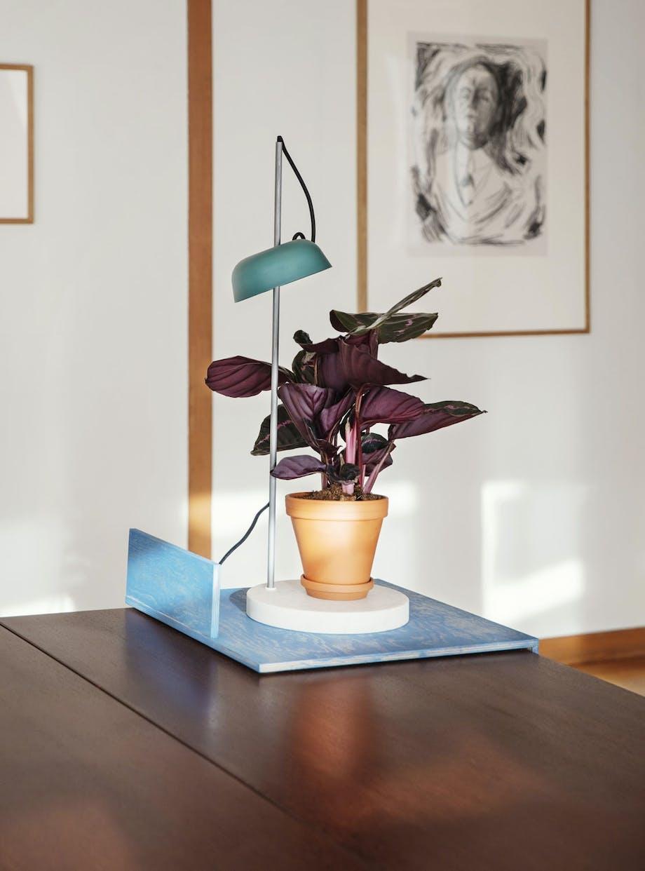 Lys til plantene