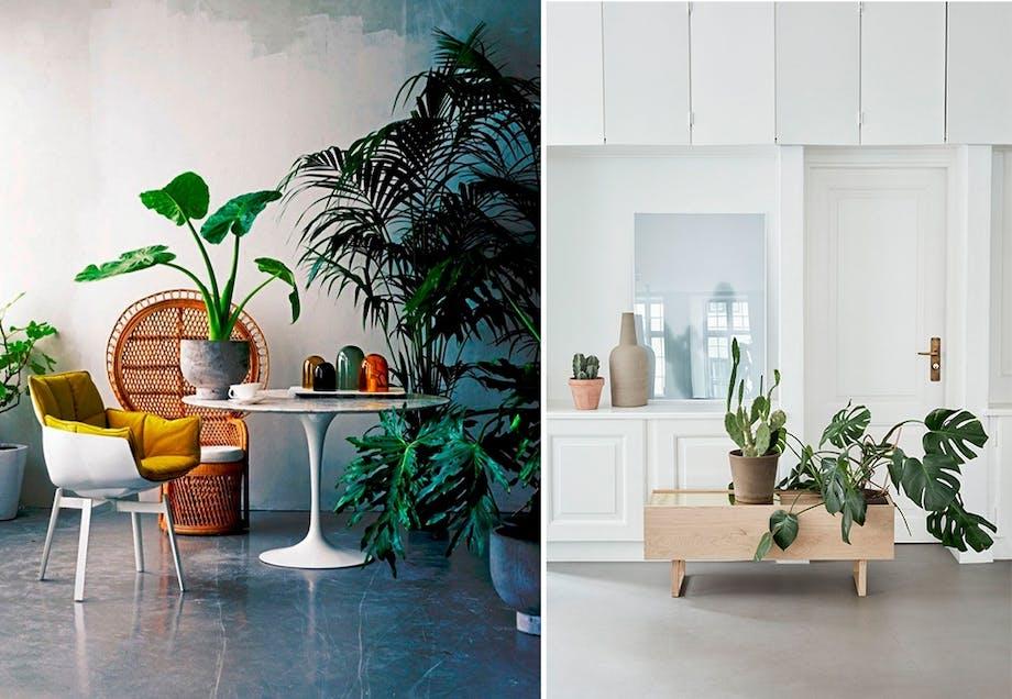 8. Botanikk i boligen