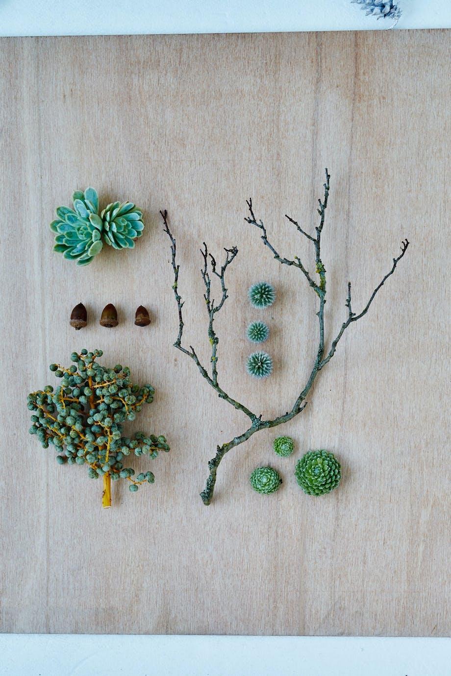 Grønn krans med sukkulenter