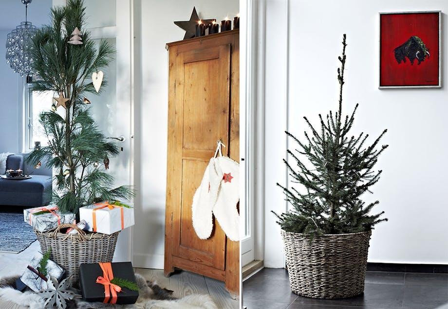 Plant juletreet i en kurv