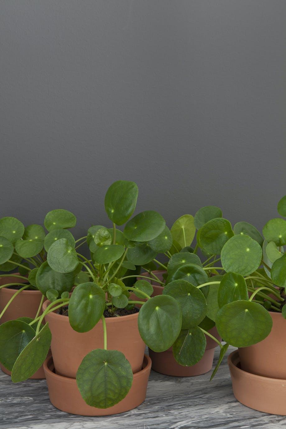Retroplante gjør comeback
