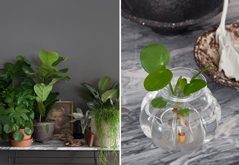 interiør med grønne planter
