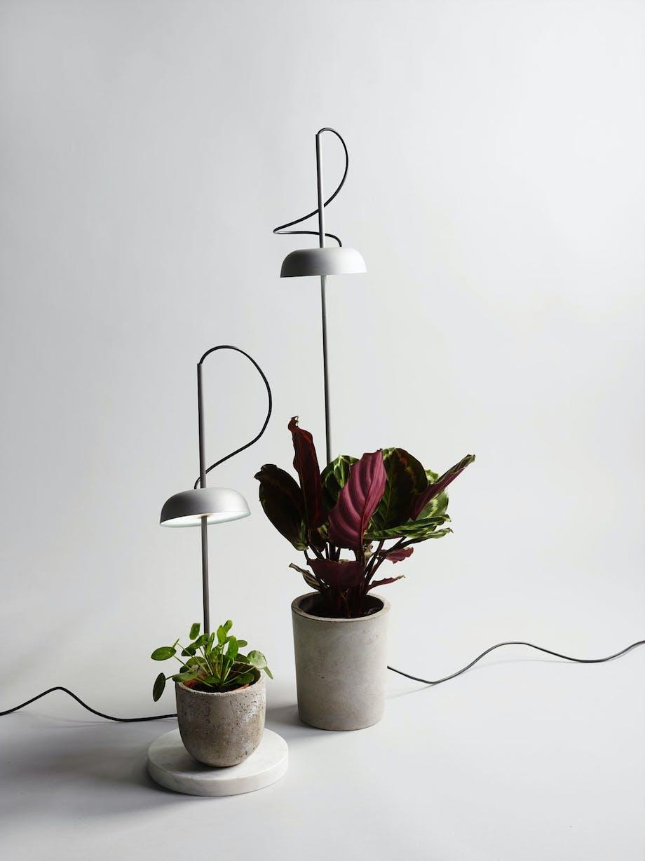 Fersk 13 trendy interiørtips til blomster og grønne planter | Bo-bedre.no GB-06