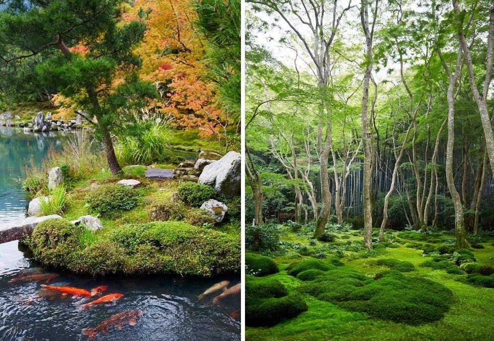 Slik får du mosen til å trives i hagen - og får en ekte japansk zenhage!